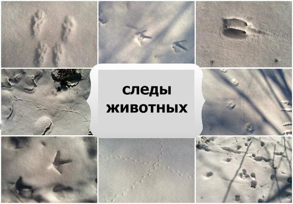 Animal-Tracks-numbered
