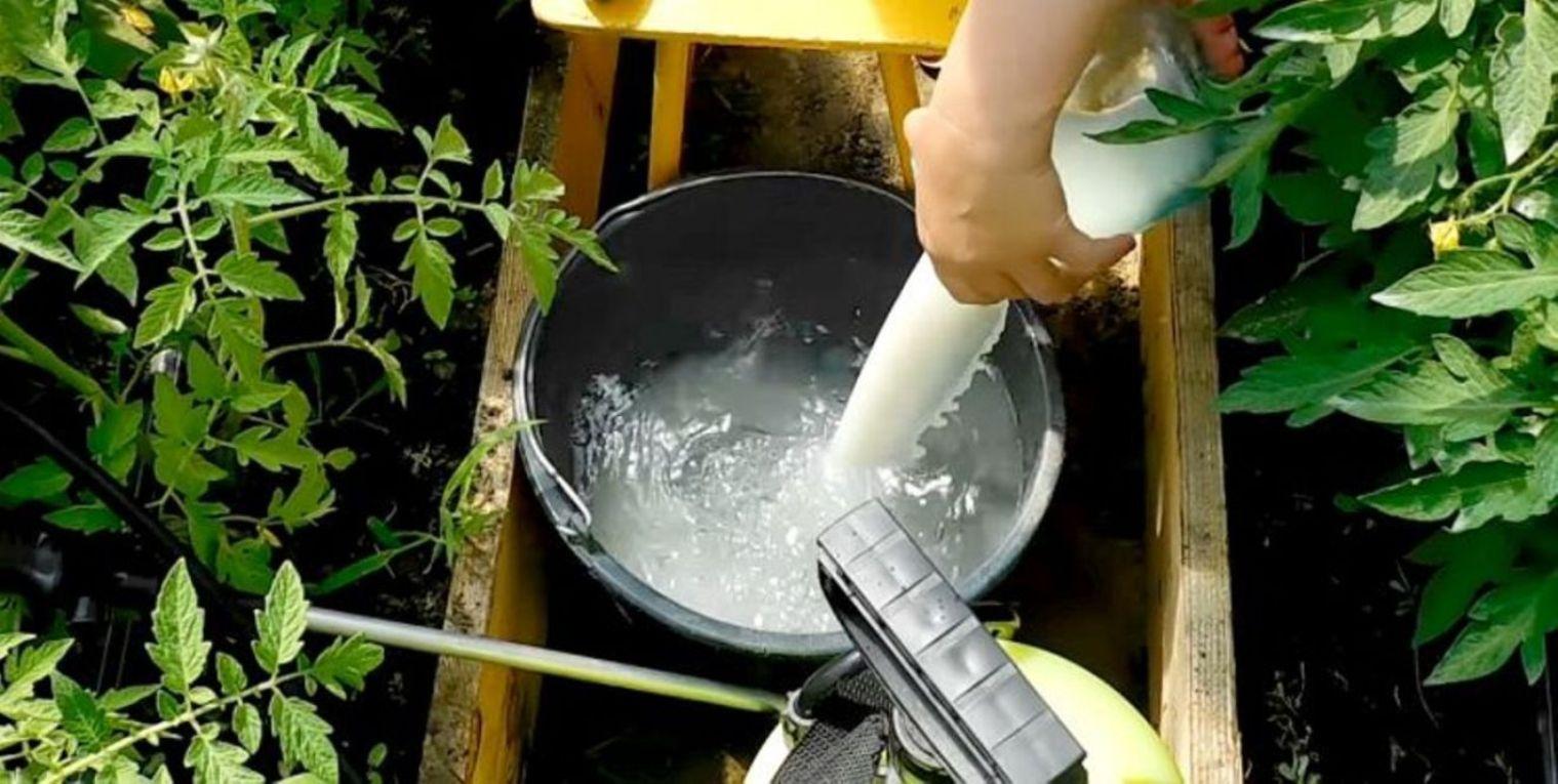 Пищевая сода при выращивании огурцов – польза или вред?