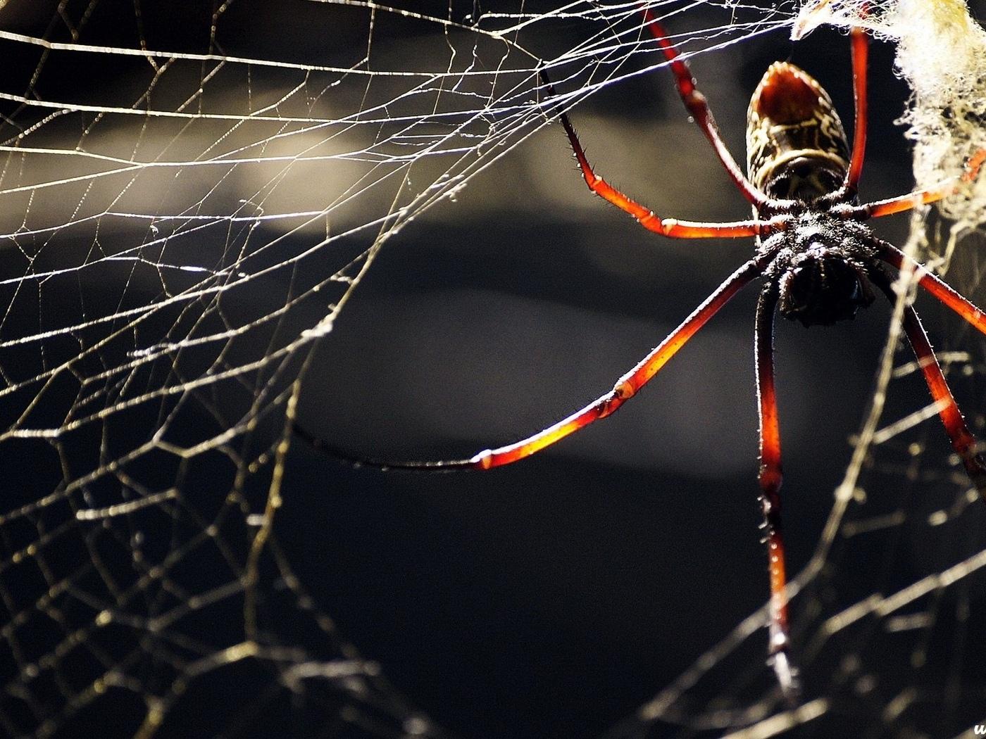 Почему не стоит убивать пауков в доме