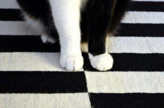 кот лапы белая черная полоса